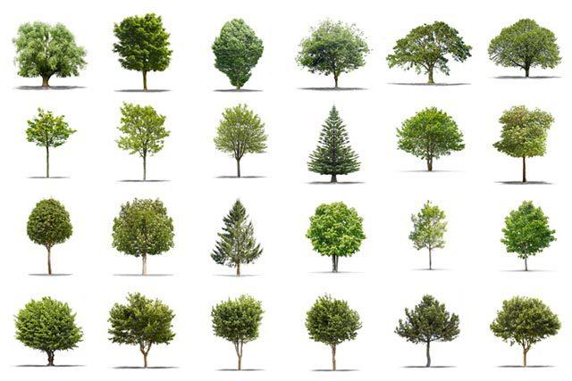 Bomen Voor In De Tuin.Gratis Een Boom In Je Tuin Met Subsidie Van De Gemeente